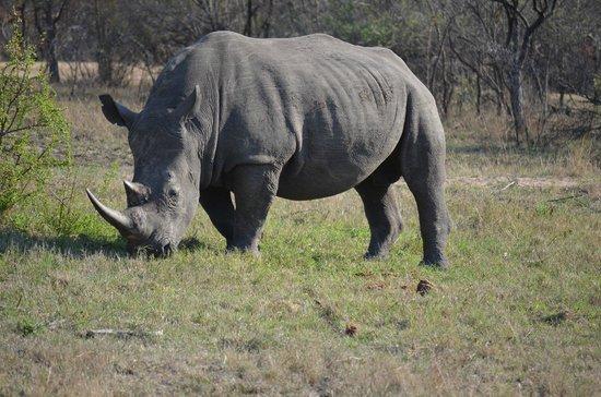Cheetah Plains: Rhino