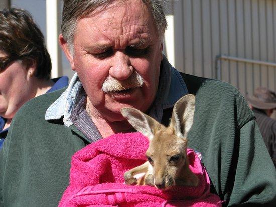 Josephine's Gallery & Kangaroo Orphanage : A baby joey