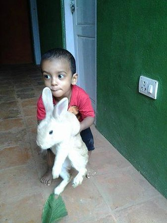 Harithavanam Farm House: kids playing with rabbit