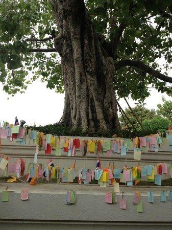 Templo del Amanecer (Wat Arun): วัดอรุณ