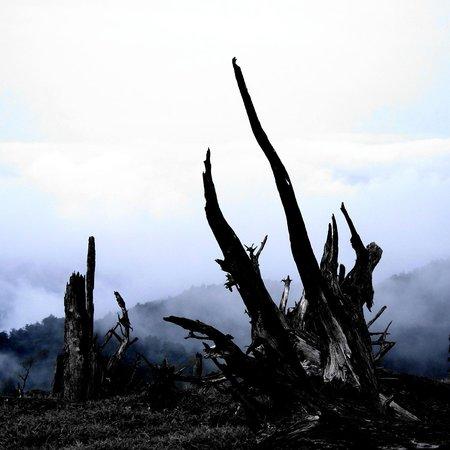 Mount Odaigahara: 正木ヶ原