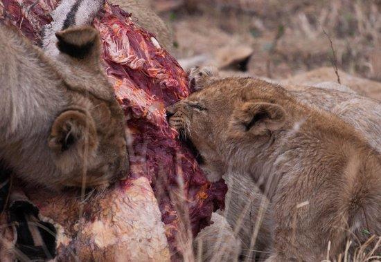 Sanctuary Makanyane Safari Lodge: Dinner!