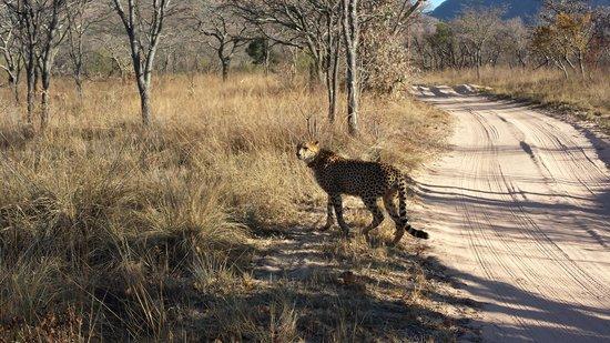 Lakeside Lodge : Plenty of animal sightings