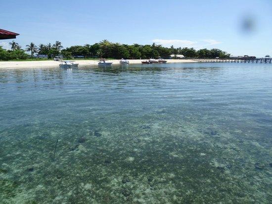 Scuba Junkie Mabul Beach Resort : Bien de loin