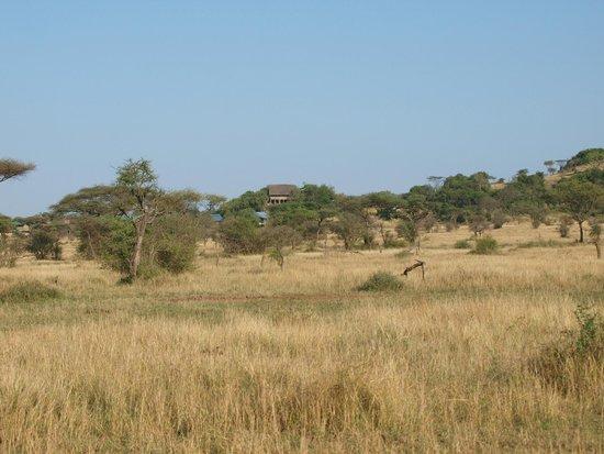 Ikoma Wildcamp: Blick zurück bei Abfahrt in die Serengeti, rechts das erhöhte Restaurant