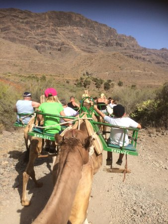 Camel Park Arteara: I karavane gennem Fatagadalen