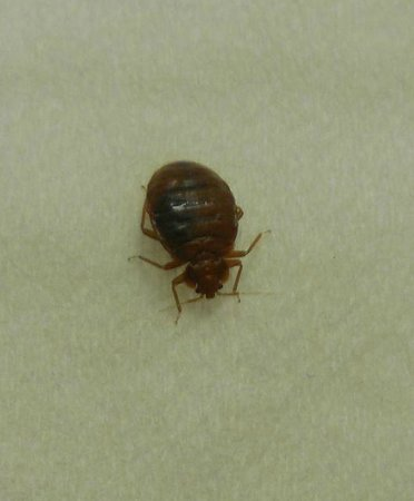 Fairfax, VA: Candlewood suites bed bug