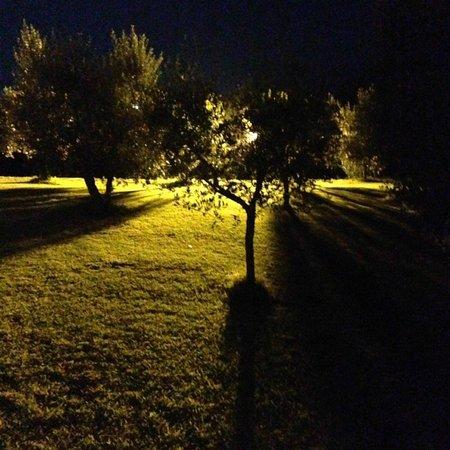 Agriturismo Cerreto: Jardín Común