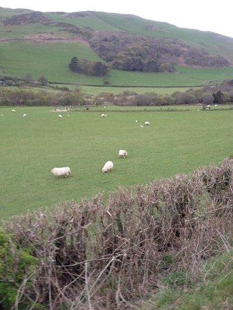 Talyllyn Railway: Countryside