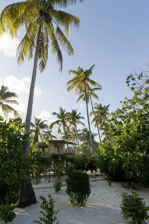 Zanzibar White Sand Luxury Villas & Spa (Relais & Chateaux): Lush gardens and palm trees