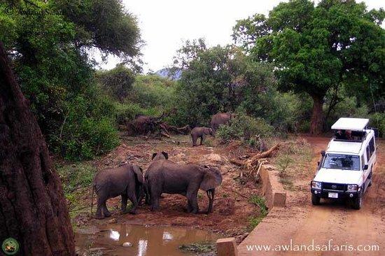 Awland Safaris - Day Tours