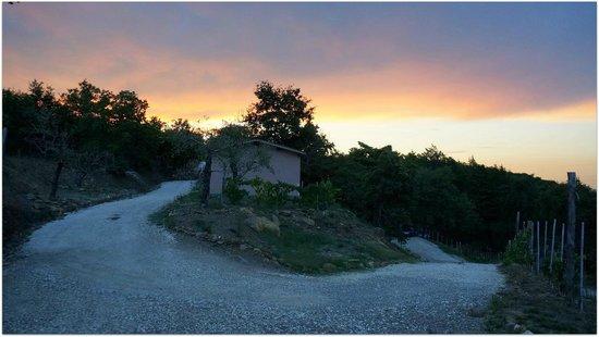 Dodo Village: Дорога от палатки к бассейну и ресторану.