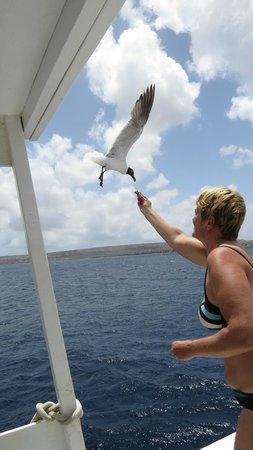 Sea Cow Snorkeling Trips: Ze eten gewoon uit je hand.