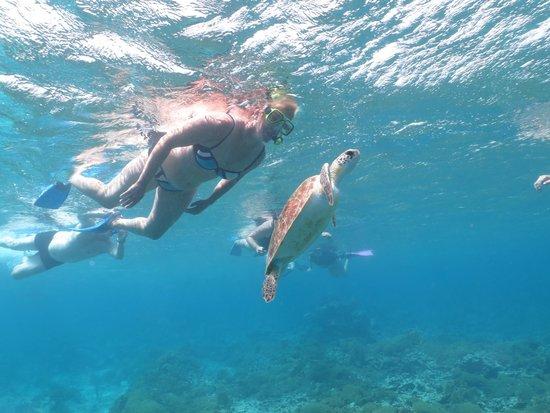 Sea Cow Snorkeling Trips: Zwemmen met een schildpad. In één woord GEWELDIG!