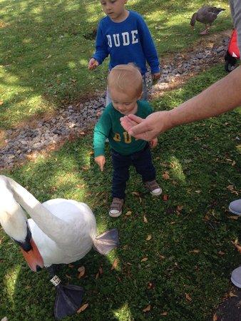 WWT Slimbridge Wetland Centre: Finley bear and the swan