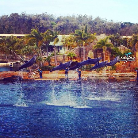 Sea World: Great dolphin show!