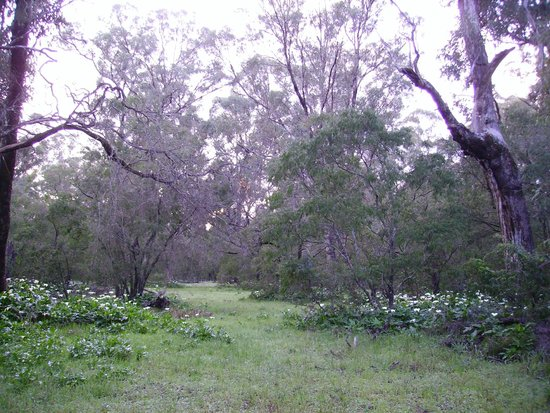 Inn the Tuarts Guest Lodge Busselton: Ludlow Tuart Tree Forest full of birds.