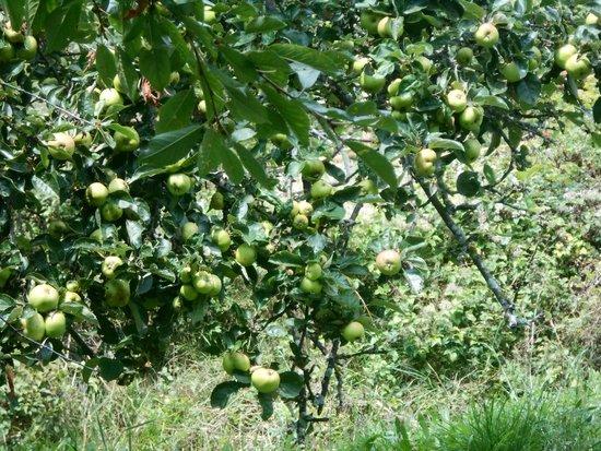 Alberi da frutto foto di azienda agricola alta valle for Foto alberi da frutto