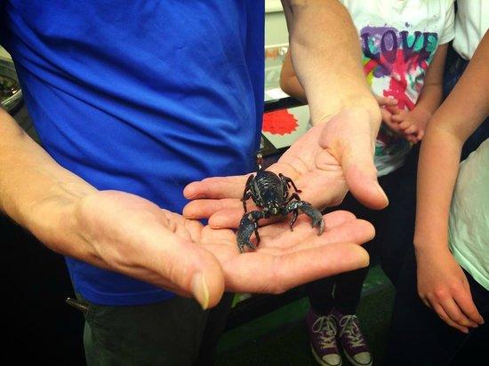 Straffan Butterfly Farm: Scorpion