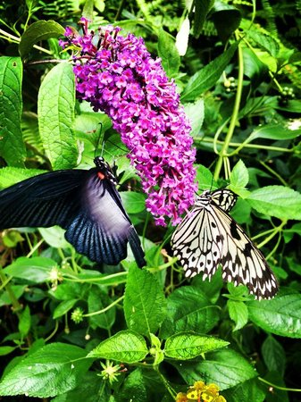 Straffan Butterfly Farm : Butterfly