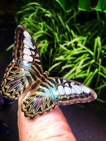 Straffan Butterfly Farm: Butterfly