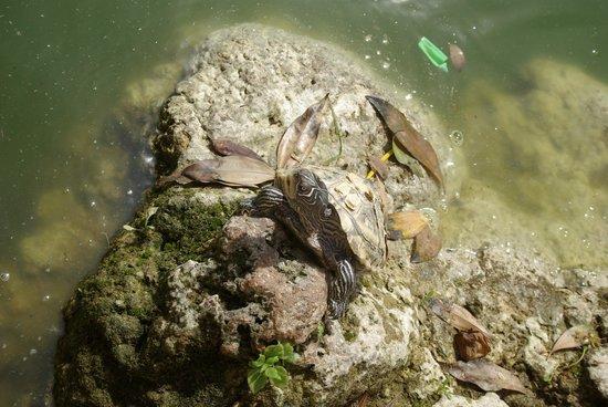 Parc de la Ciutadella : tortue