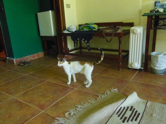 Panorama Bungalows Resort El Gouna: Кошкам можно все