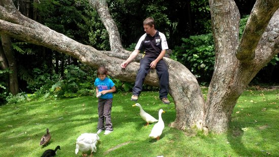 Katikati Bird Gardens: Sitting in a tree feeding birds