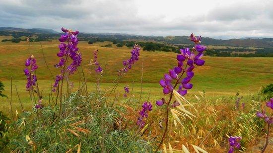 Santa Rosa Plateau Ecological Reserve: wild flowers