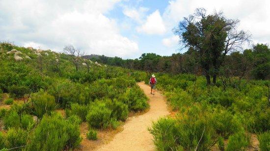 Santa Rosa Plateau Ecological Reserve: traiils