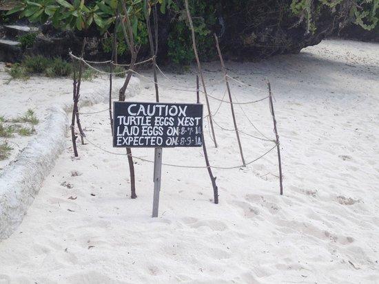 The Sands At Chale Island: nido di tartaruga marina