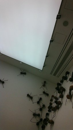 Saatchi Gallery: Ants on the wall