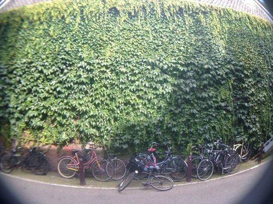 walking along Jordaan, enjoying the quiet side of Amsterdam