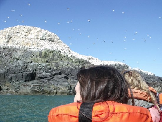Voyages of Discovery (Ramsey Island): Grassholm