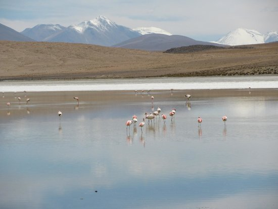 Laguna Colorada: Flamingos around you...