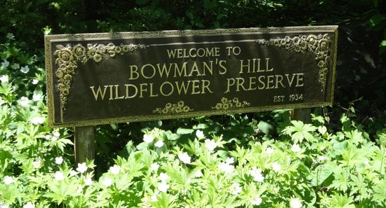 Bowman's Hill Wildflower Preserve : Welcome