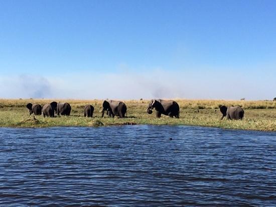 Chobe Game Lodge : Elefantenherde @ Chobe
