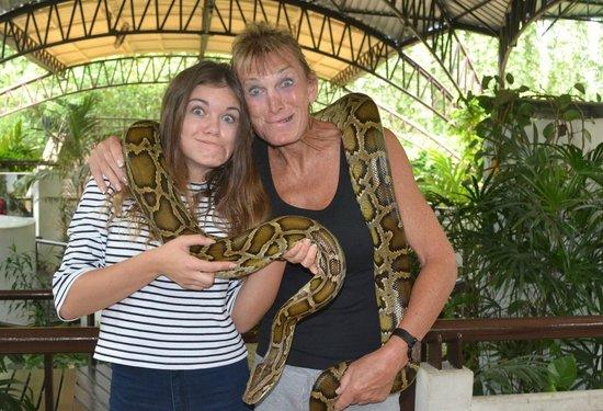 Snake Farm (Queen Saovabha Memorial Institute): The snake show