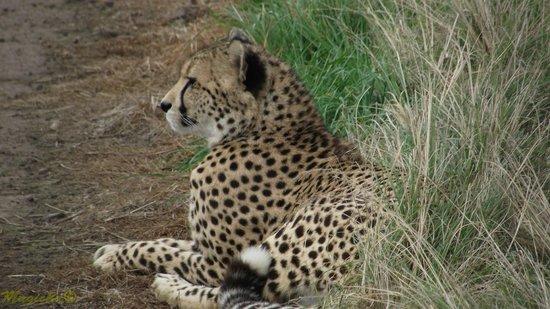 Plettenberg Bay Game Reserve: Cheetah