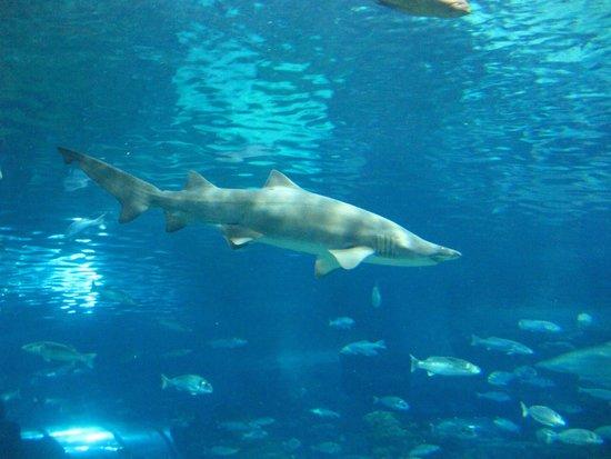 L'Aquarium de Barcelona: Squalo