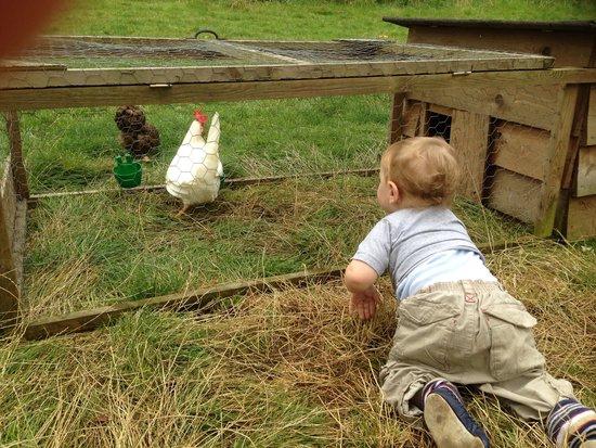 Malting Farm: Meeting the chickens
