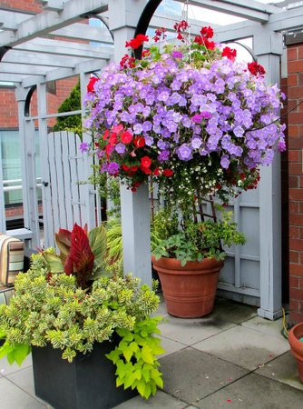 Inn at the Market: Beautiful flowers on the rooftop