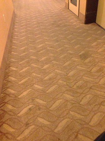 Comfort Suites North IH 35: Hallways floor... 'cleaned' but stained.