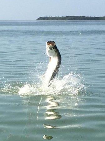 Bud n' Mary's Sportfishing Marina: My 1st Tarpon,Ka