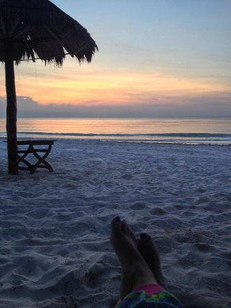 Ana y Jose Charming Hotel & Spa: Watching sea turtles feed at dawn
