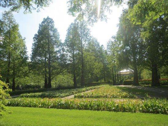 Keukenhof (Jardín de la Cocina): Dawn Redwood