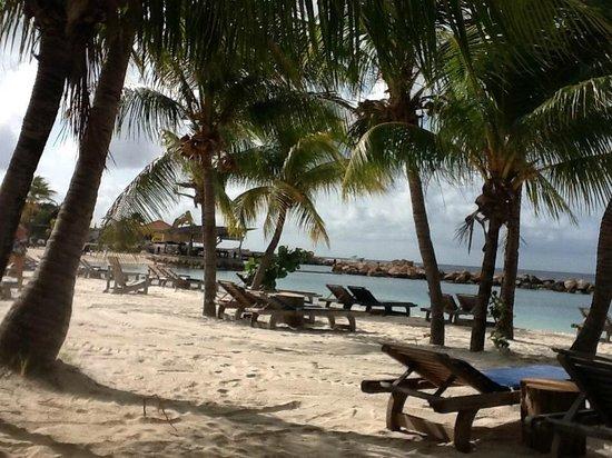 Lions Dive & Beach Resort Curacao: Geweldig strand, genoeg schaduw