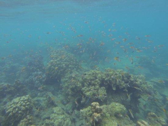 Tohko Beach Resort: Snorkeling in front of resort