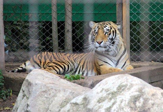 Brantford Twin Valley Zoo: No it's not Tony