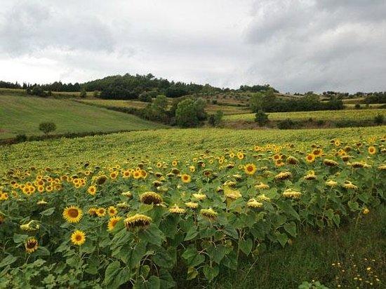 Casale Le Burgne: Vista sulle colline